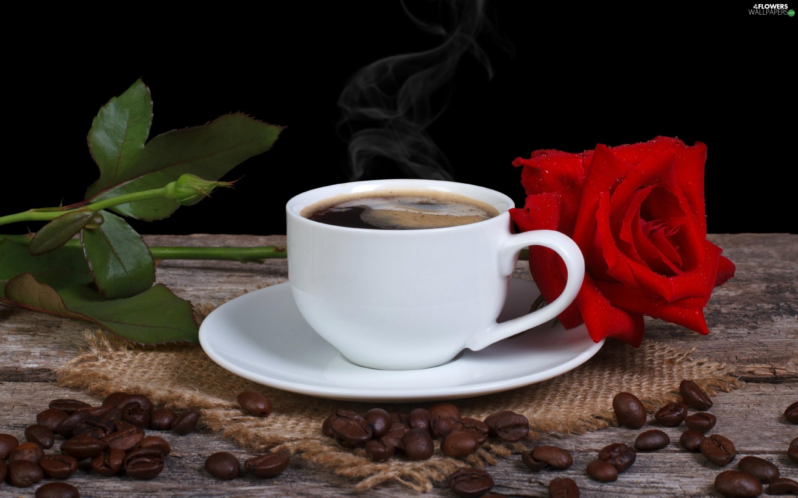 Lovely Red Rose Cafe