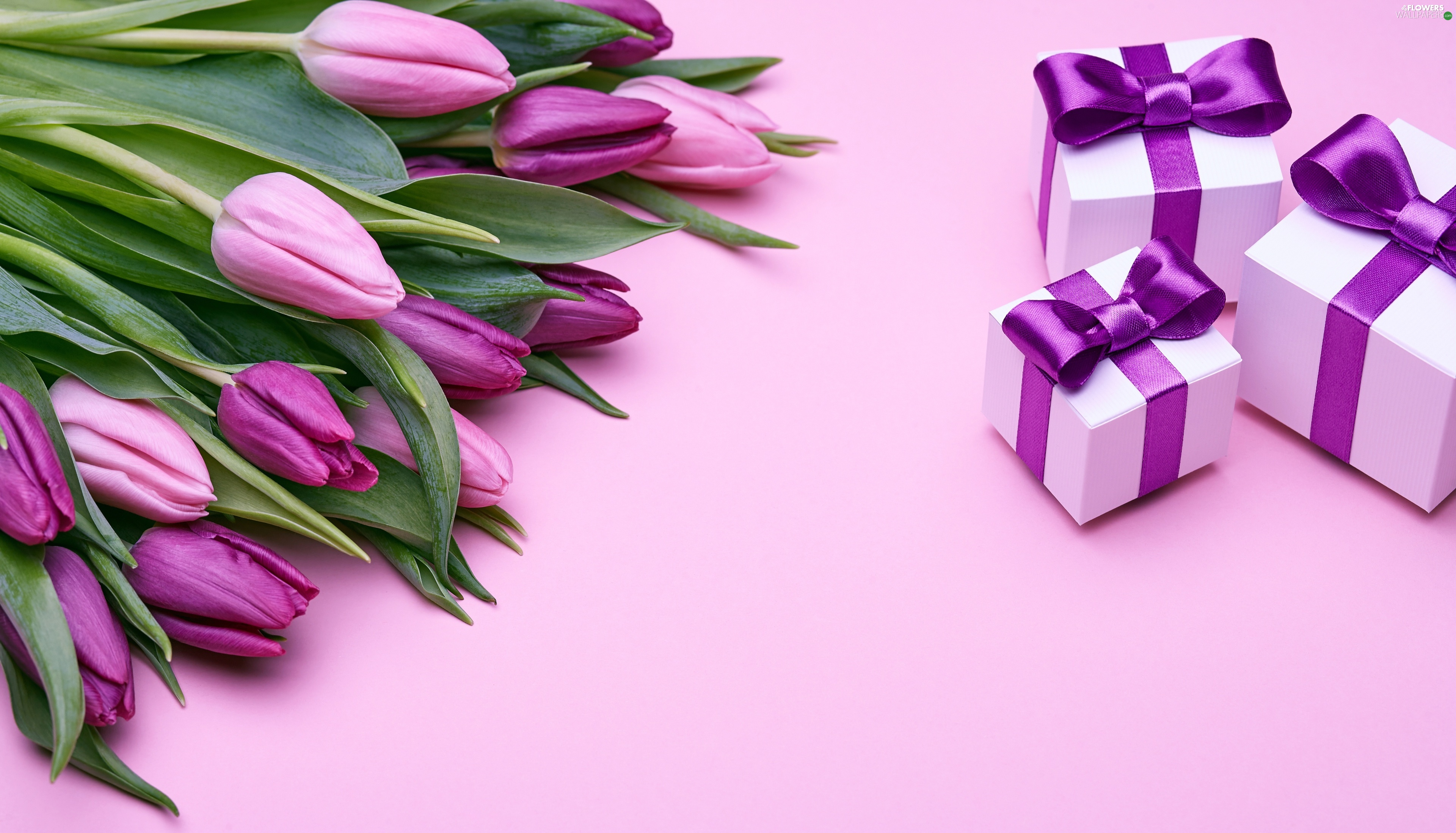 Tulips, gifts, purple