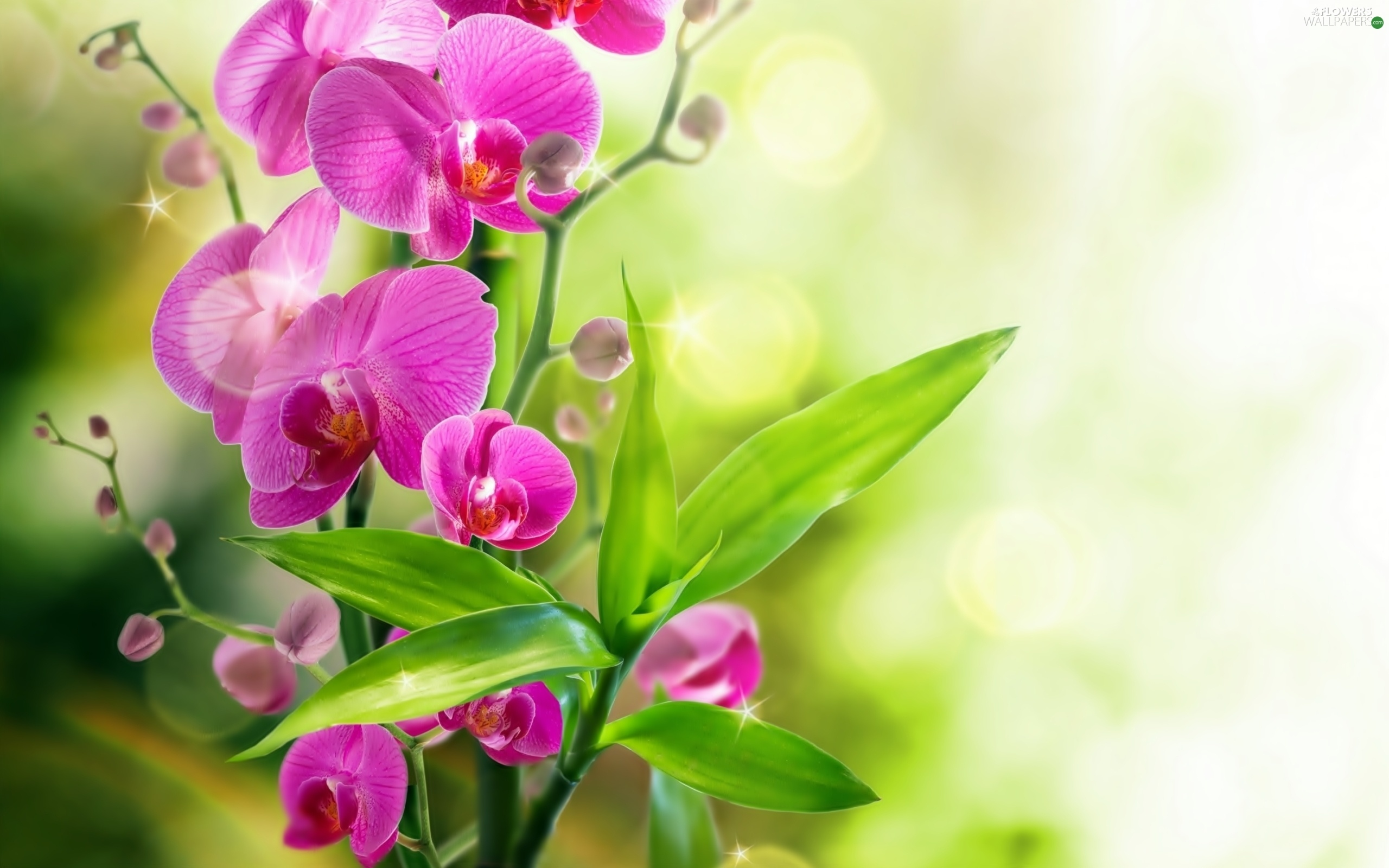 leaf orchid flowers flowers wallpapers 2560x1600