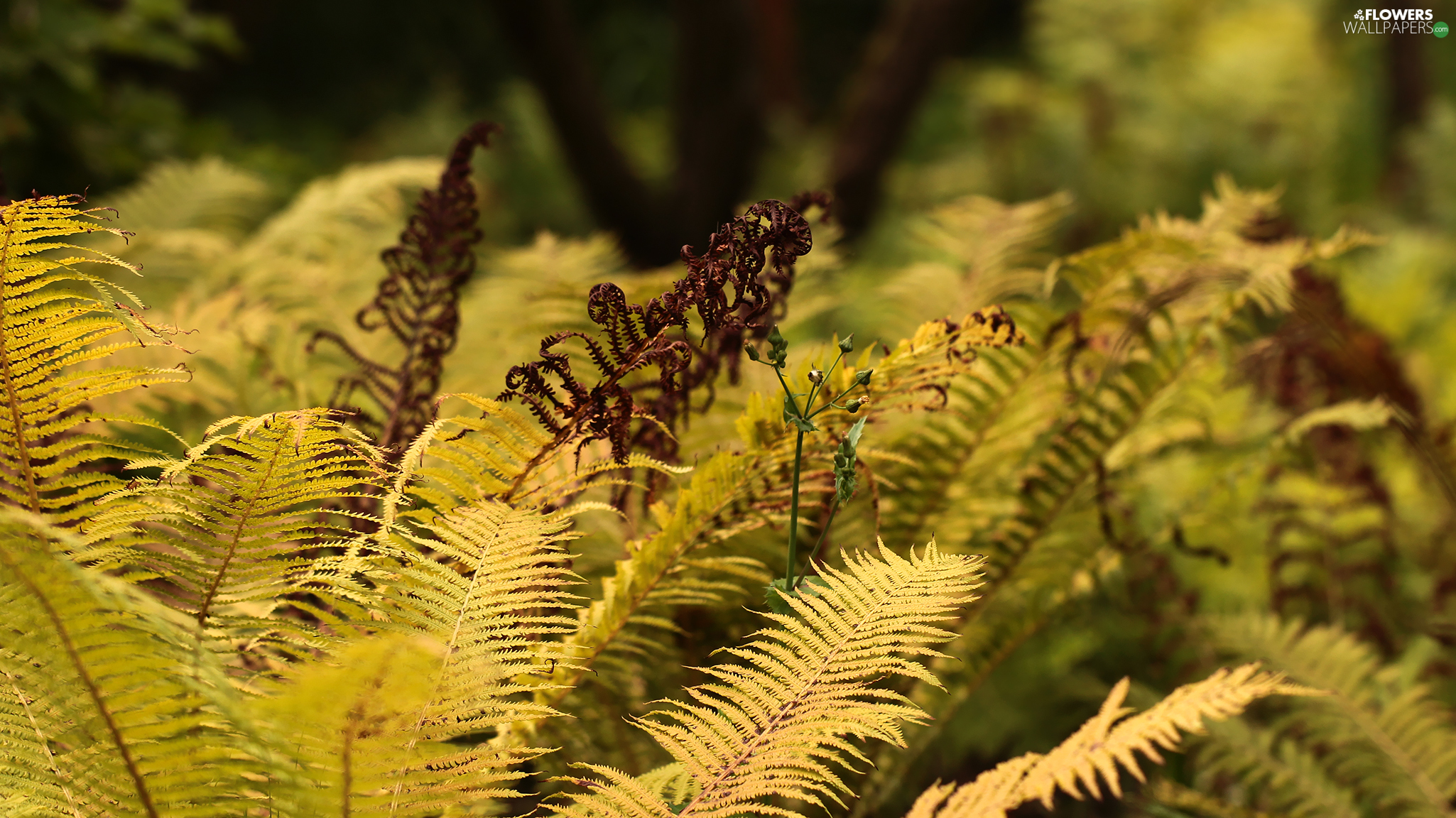 Plants, Leaf, fern