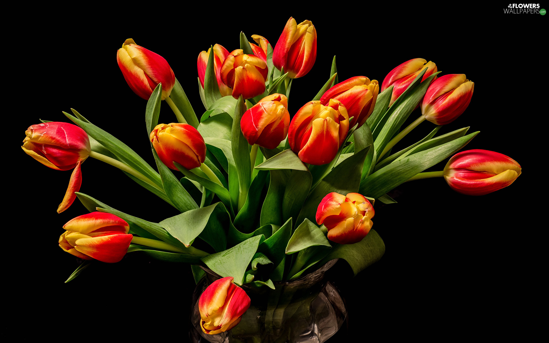 Vase, Red-Yellow, Tulips, Flowers, Black Background, bouquet