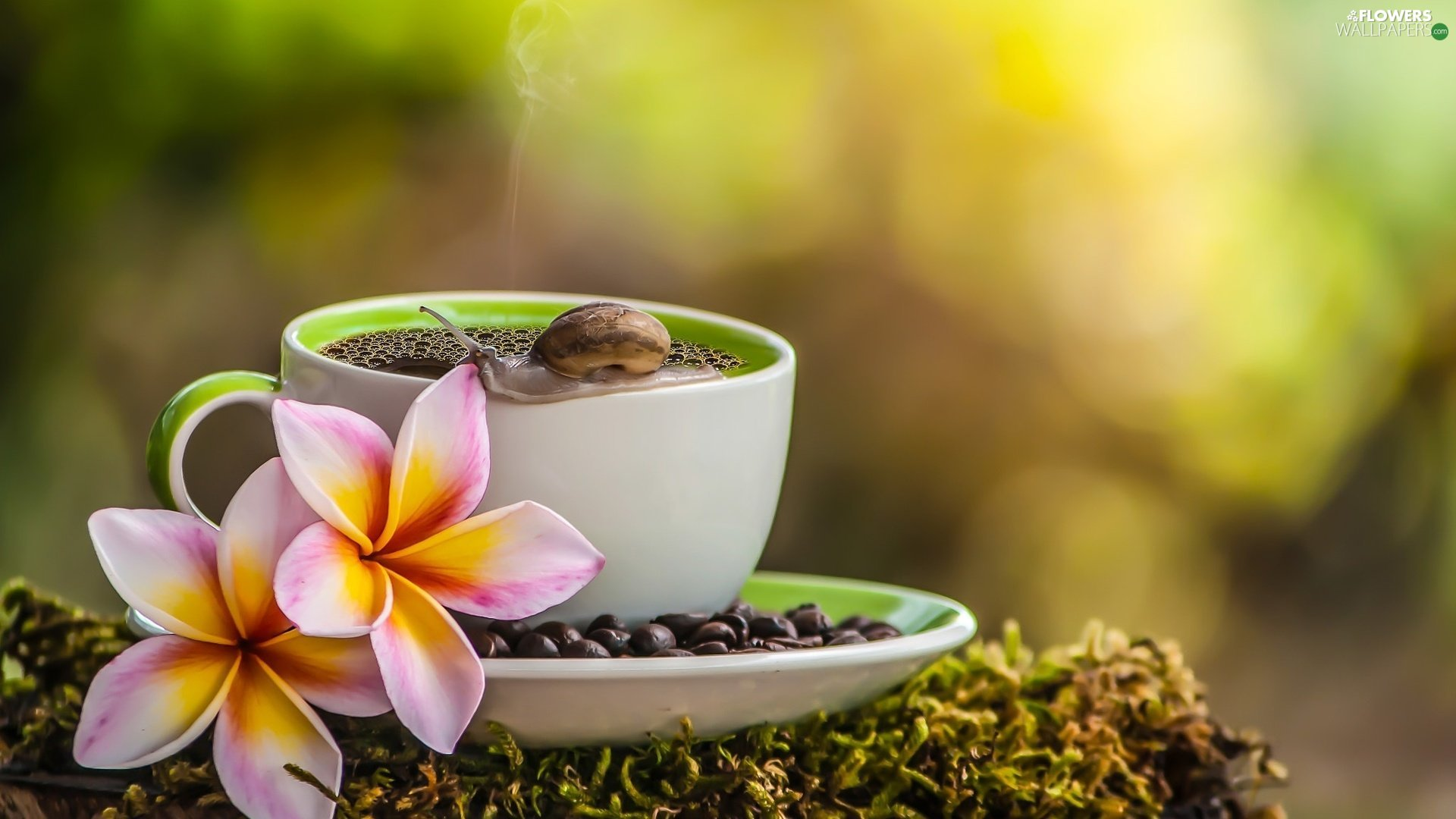 snail, coffee, Plumeria, Moss, cup