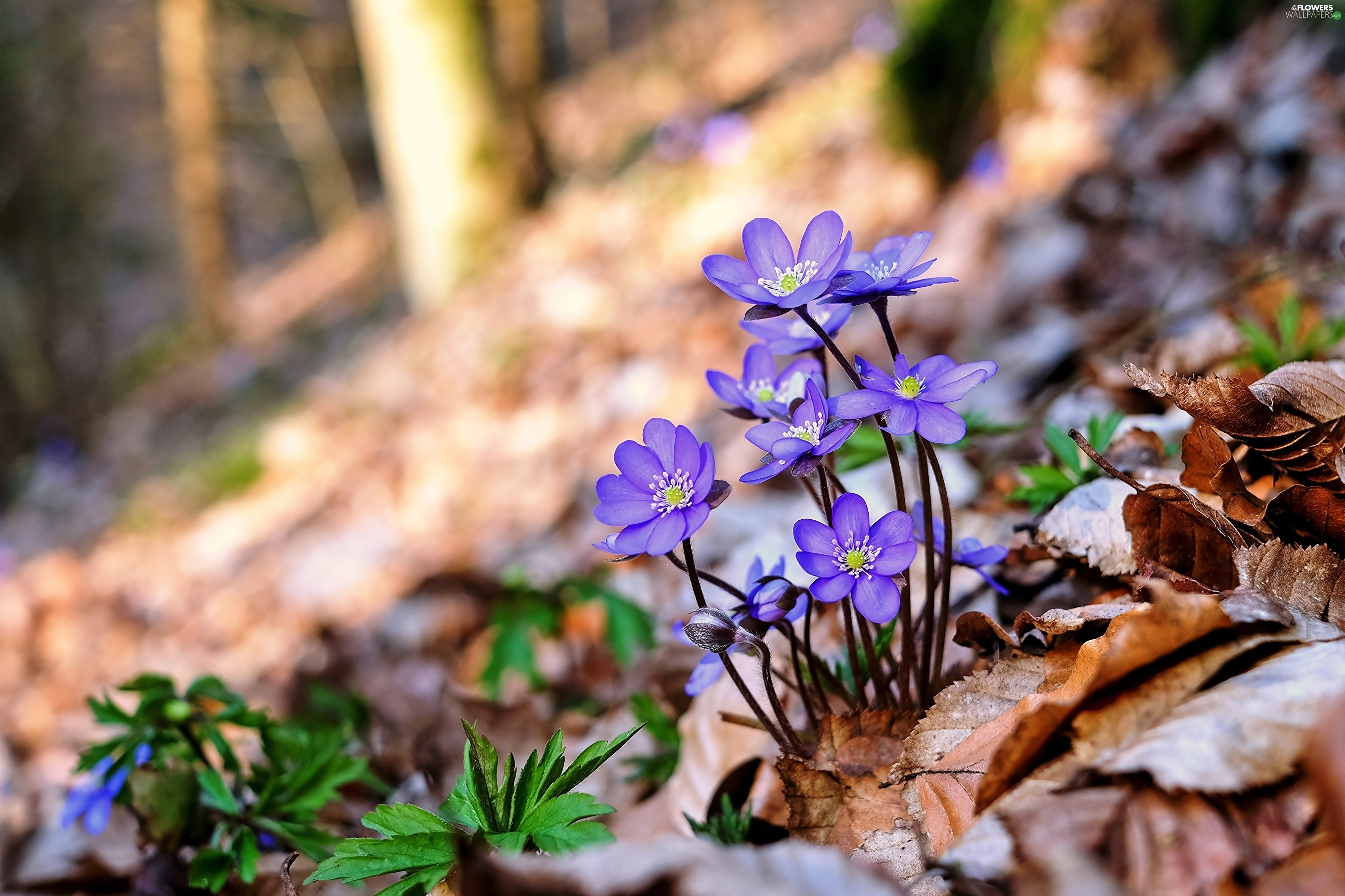 forest flowers wallpapers - photo #47