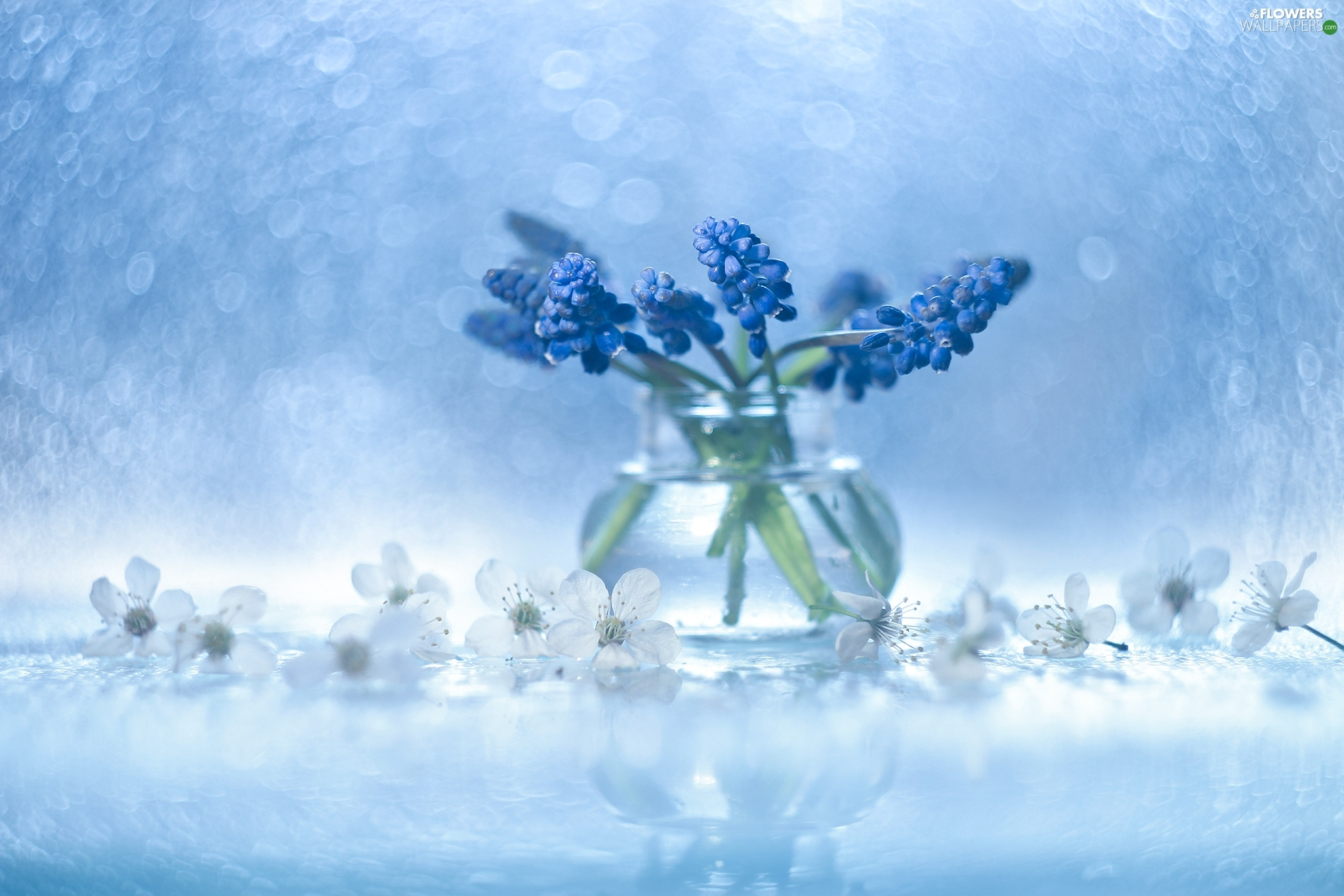 vase, Blue, Flowers, decoration, Bokeh, Muscari
