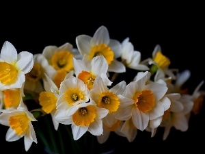 black, an, Daffodils, tle, bouquet