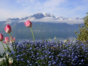 Blue, Flowers, lake, Tulips, Mountains