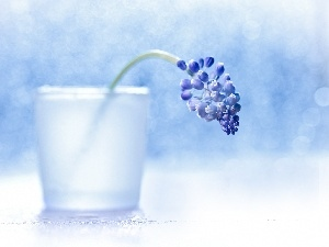 Colourfull Flowers, blue, decoration, vase, Muscari