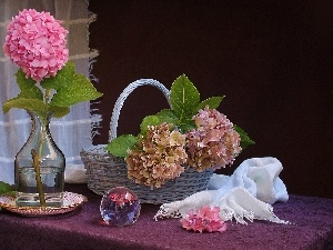 composition, hydrangeas