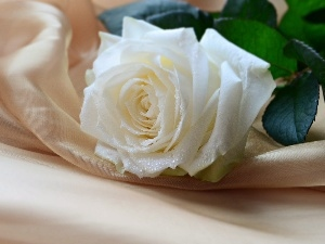 composition, White, rose
