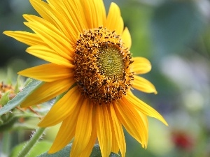 decorated, Sunflower