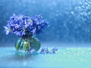 Bokeh, Flowers, vase, Siberian squill, decoration, Blue