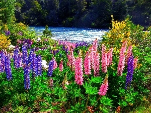 lupine, forest, River
