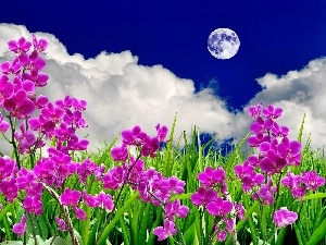 moon, clouds, Flowers, orchids