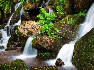 mosses, fern, waterfall, Stones