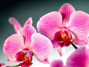 Colourfull Flowers, orchid, orchid