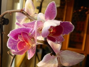 orchid, Flowers