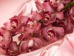 Pink, Orchidee, satin