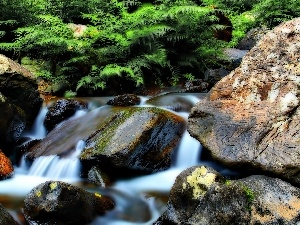 Stones, rocks, mountainous, Fern, stream