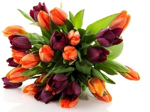 tulips, bouquet