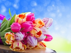 Colorful, tulips, bouquet