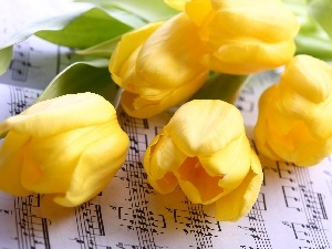 Tunes, Yellow, Tulips