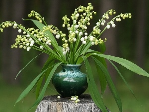 trees, vase, trunk, small bunch, viewes, Lily of the Valley