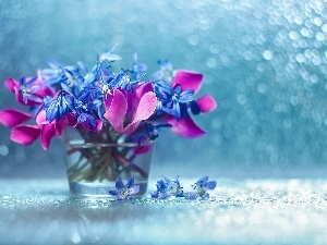 vase, Siberian squill, Flowers, decoration, Bokeh, Cyclamen