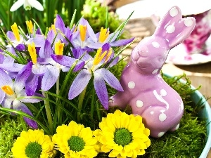 crocuses, Easter, Wild Rabbit