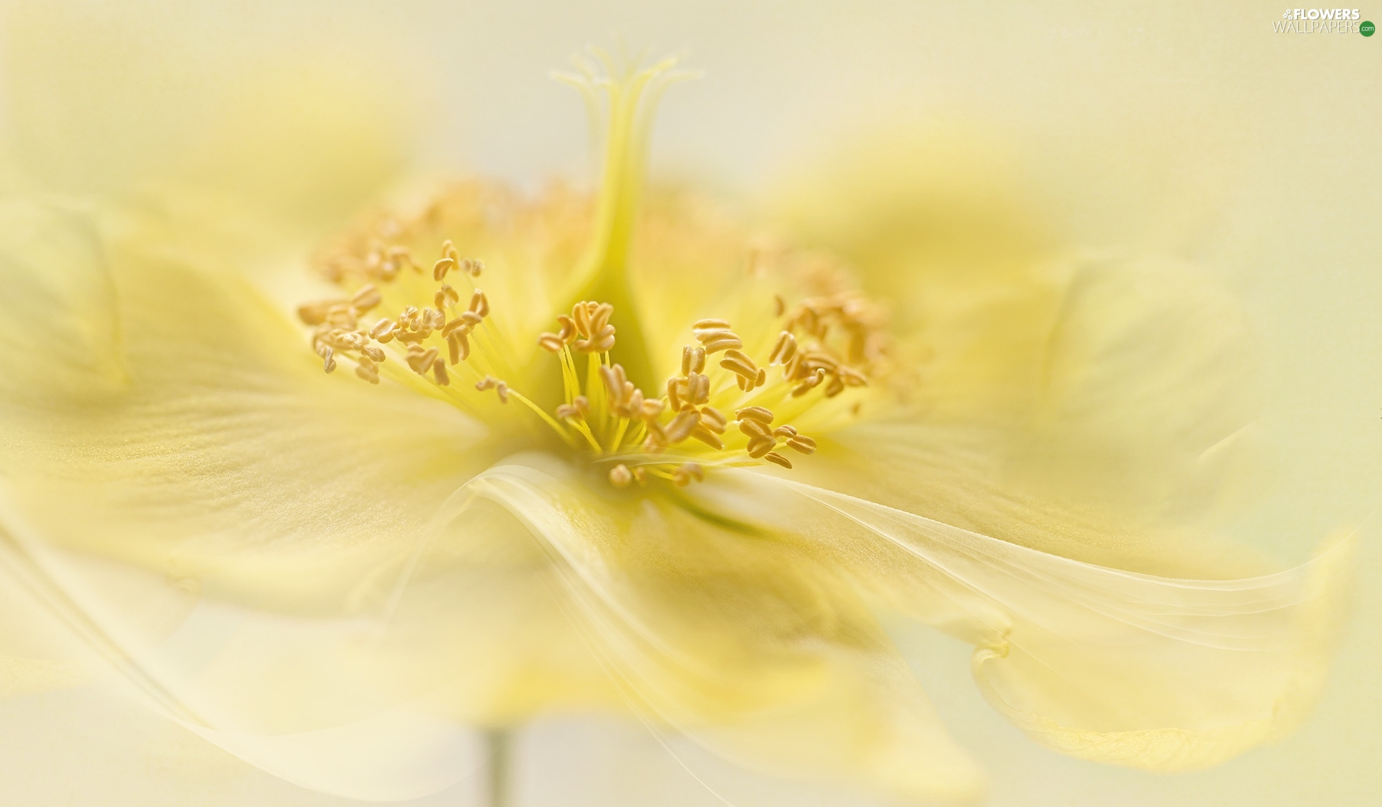 rods, Close, Yellow, anemone, Colourfull Flowers
