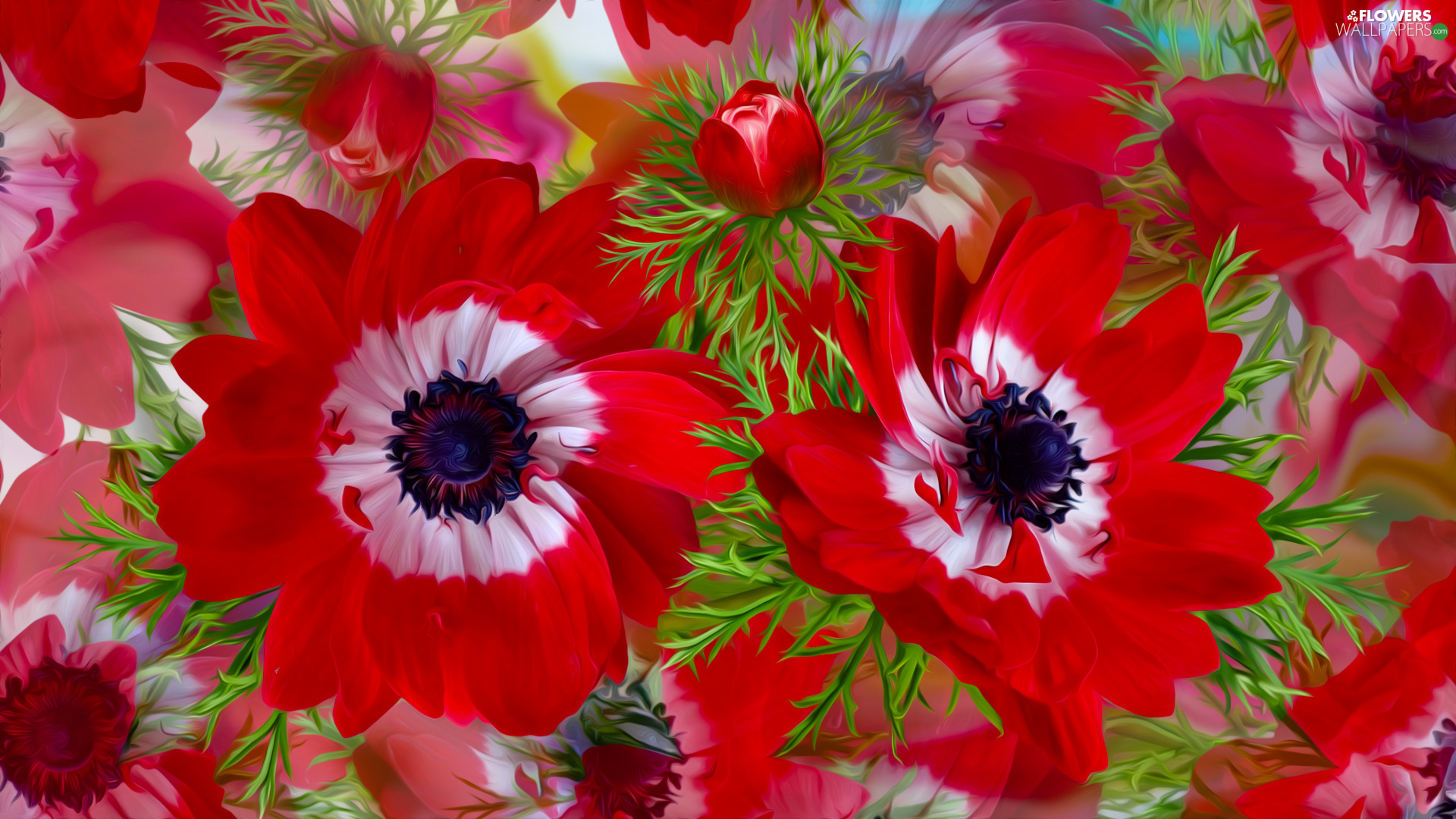 Flowers, Red, graphics, Anemones