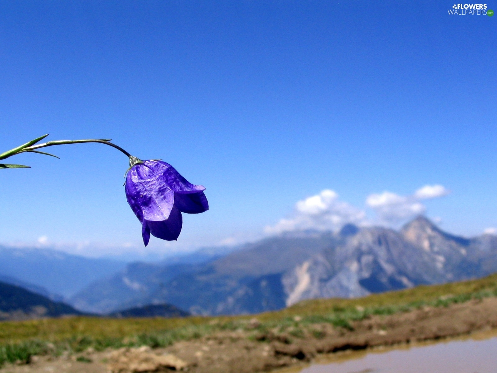 Mountains, Colourfull Flowers, bell