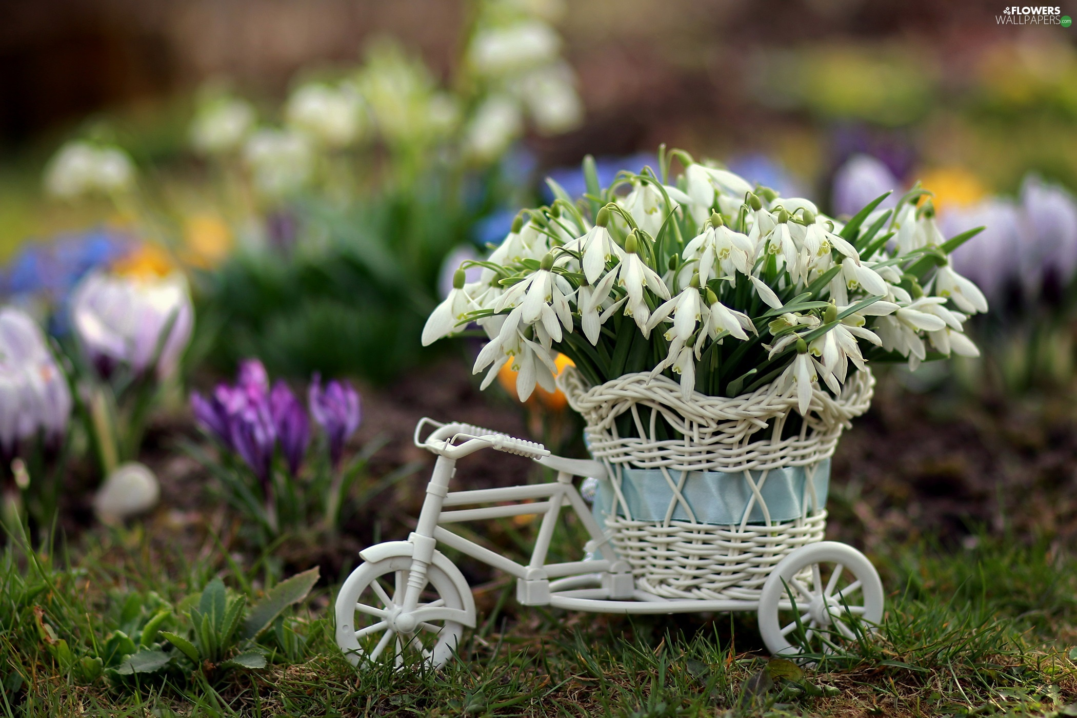snowdrops, basket, decoration, Bicycle