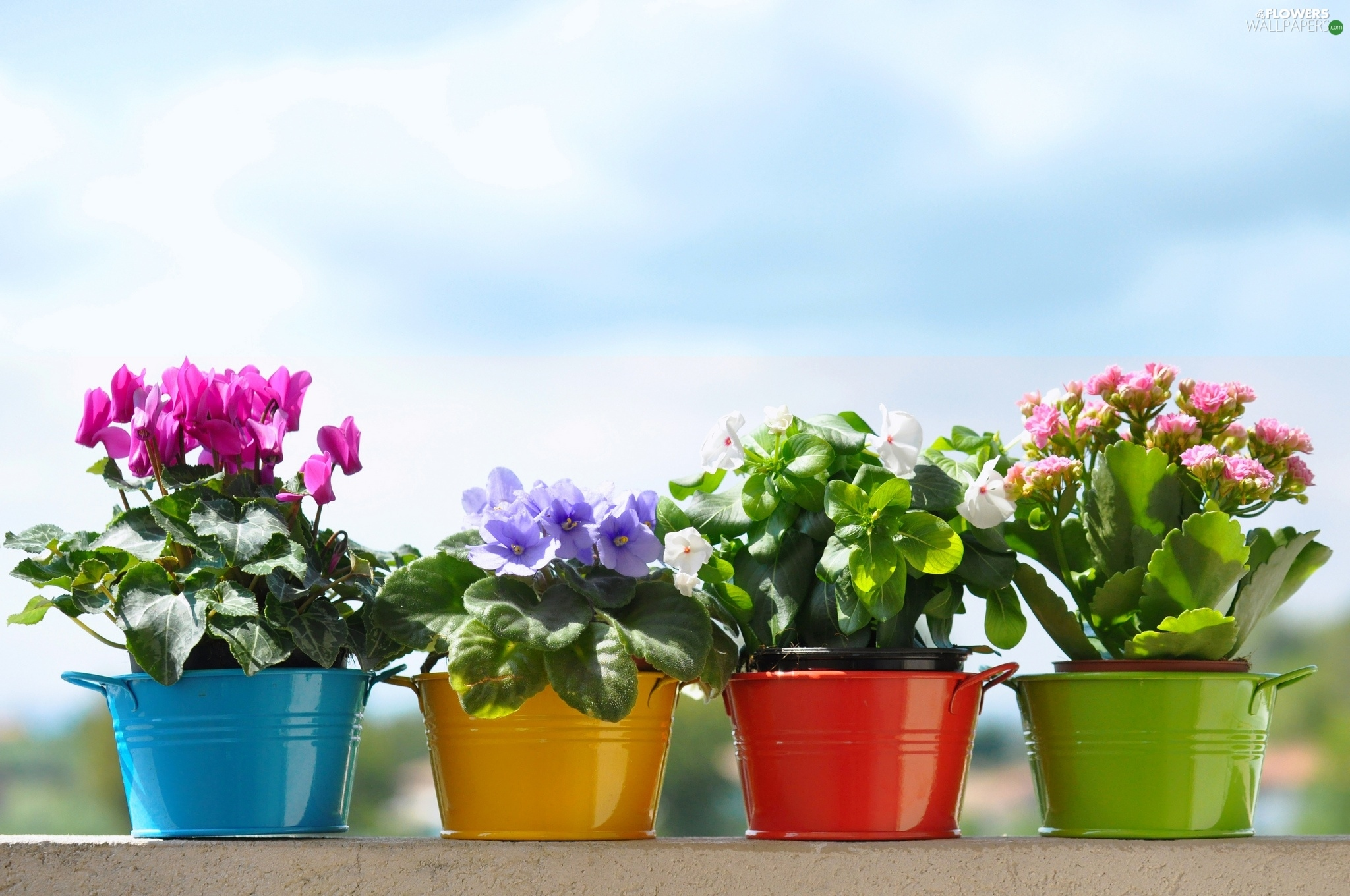 Flowers, color, Buckets, potted