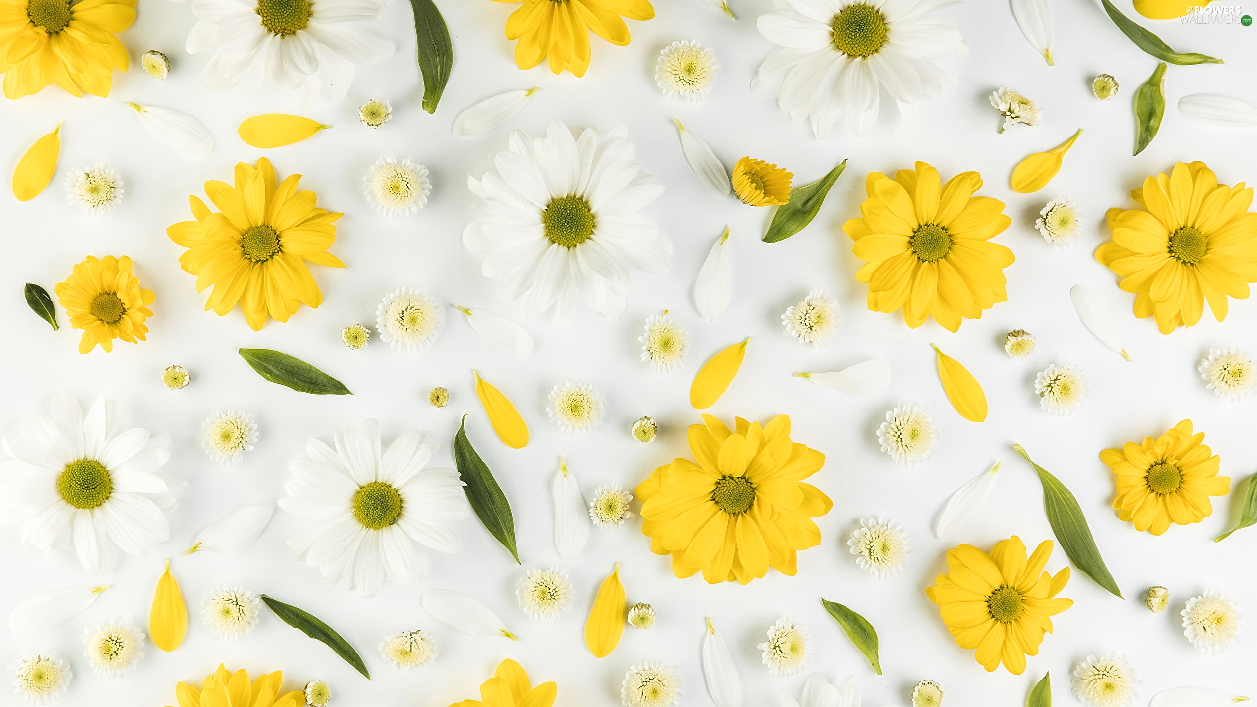Yellow Chrysanthemums Flakes White Flowers Flowers Wallpapers 2560x1440