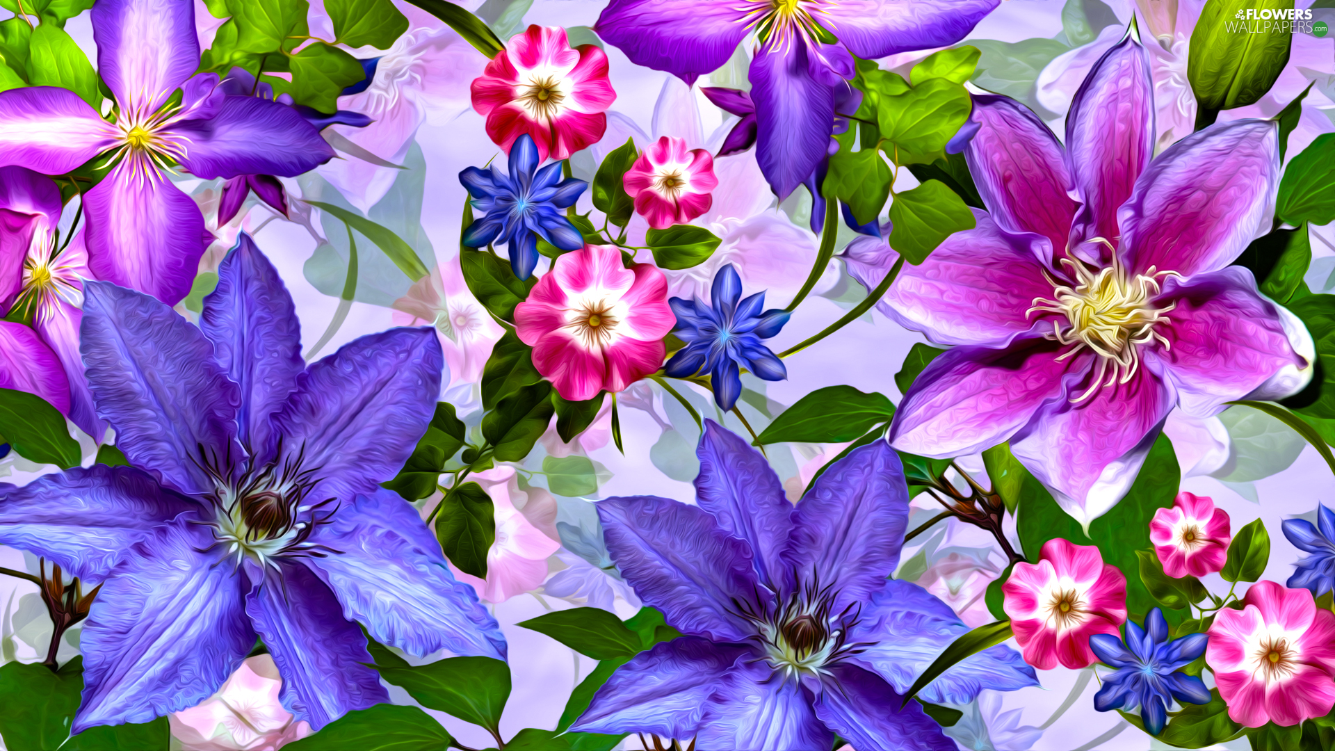 Flowers, Clematis, graphics, color