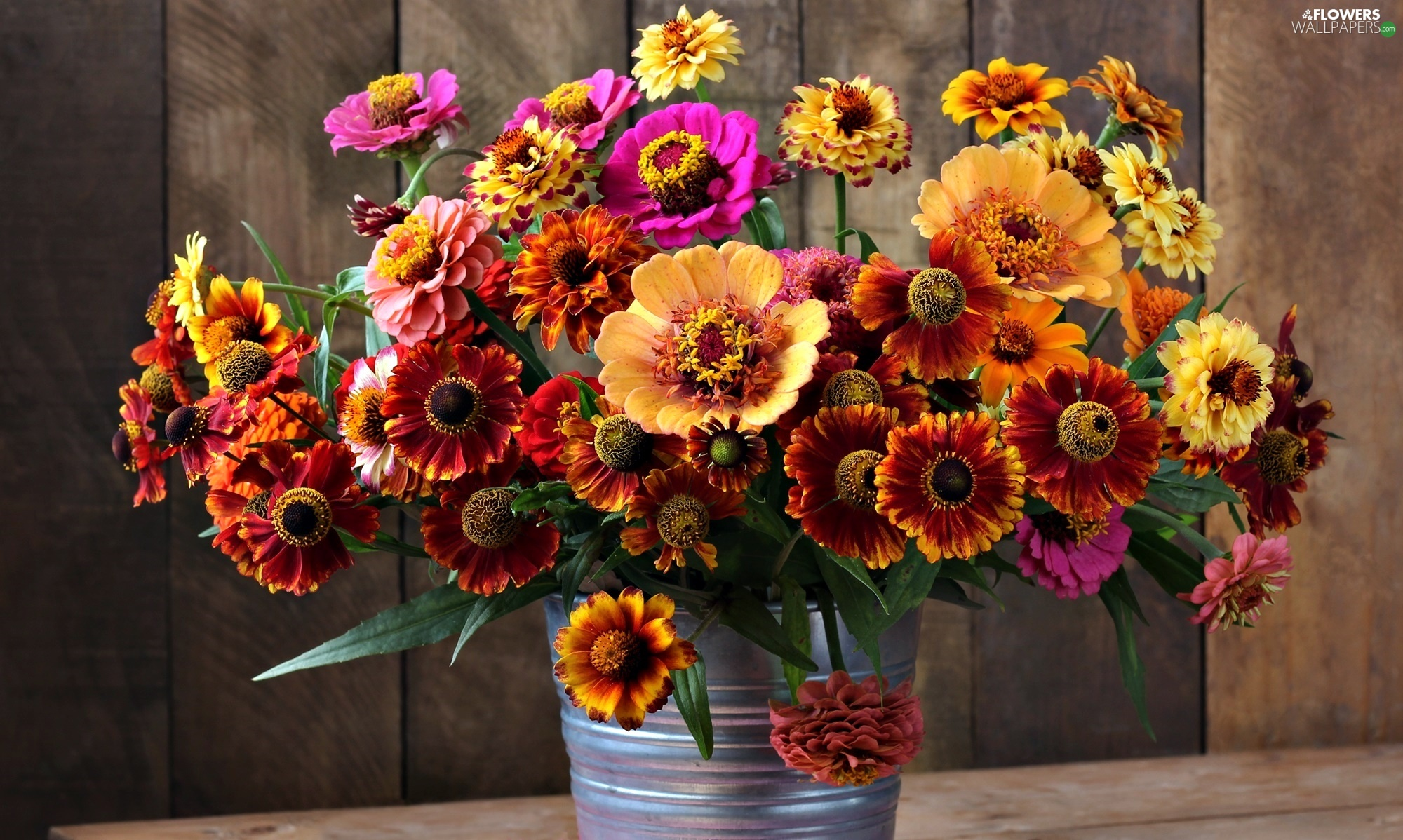 Helenium, color, Bucket, Flowers, bouquet, Zinnias, boarding