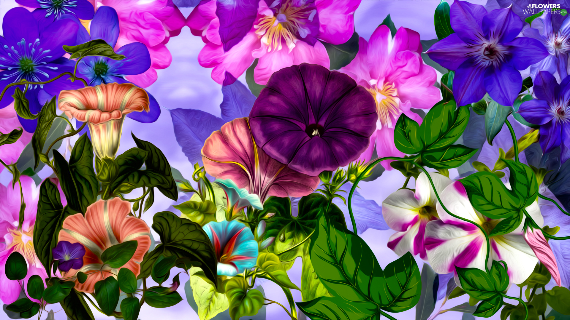 color, bindweed, graphics, Flowers