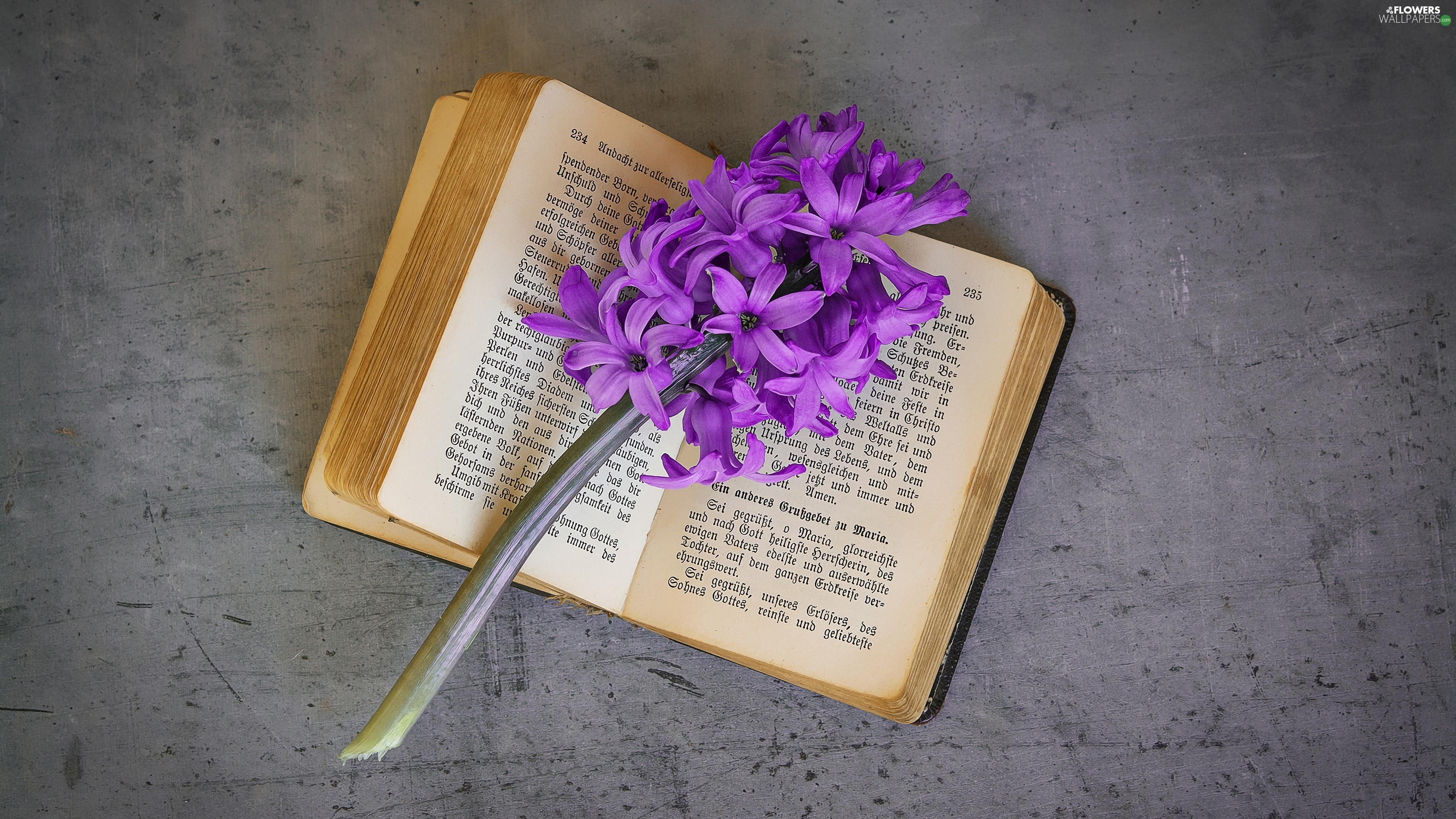 hyacinth, Book, Colourfull Flowers