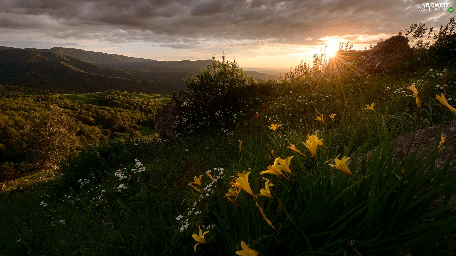 Flowers, Mountains, lilies, rays of the Sun, Yellow, Plants