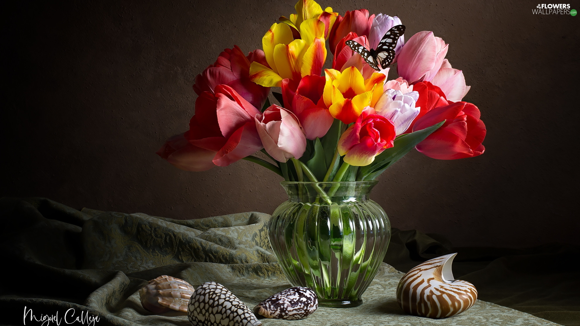 Vase, Tulips, Shells, glass, color, butterfly, composition