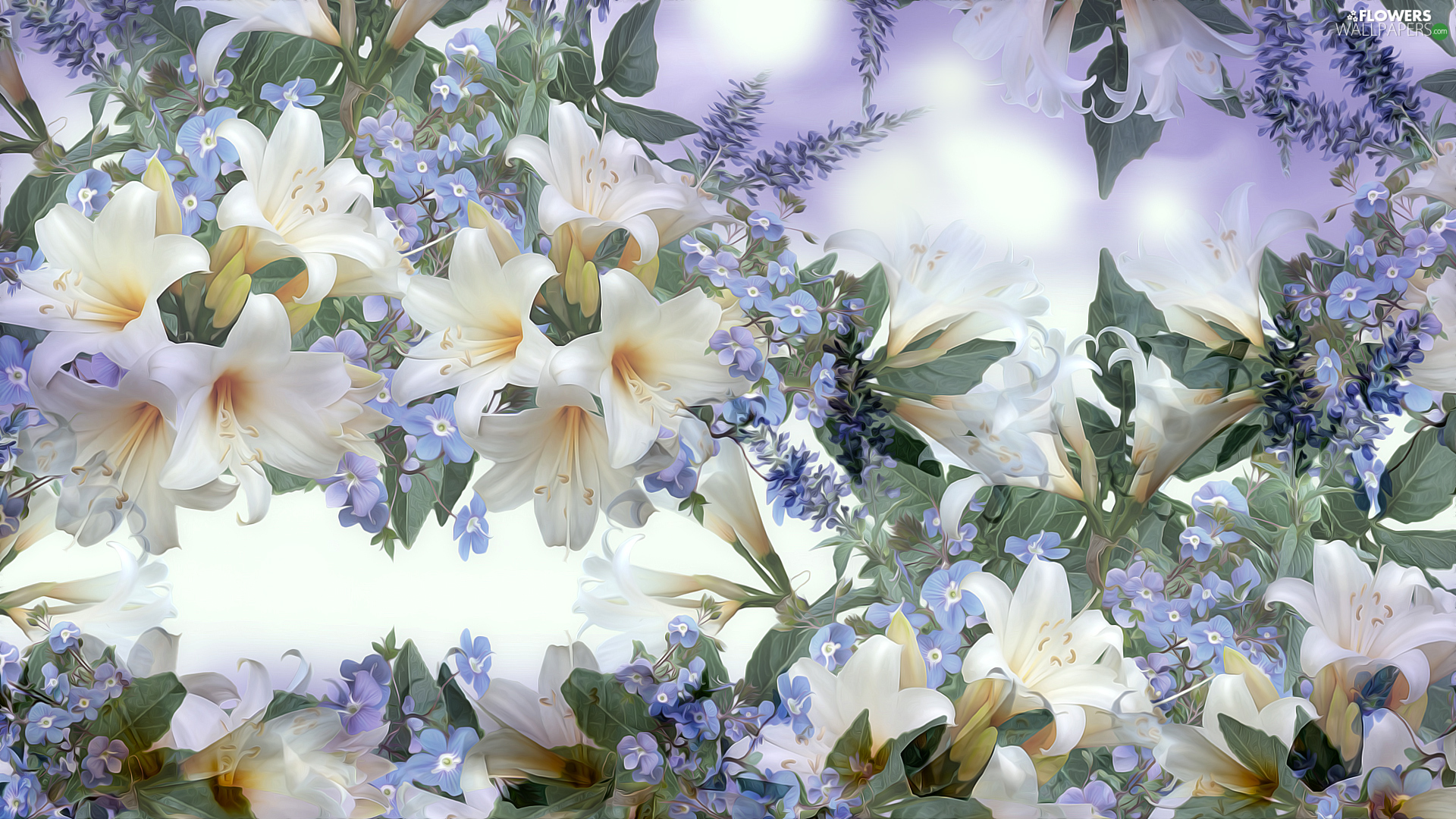 Flowers, Blue-eyed-Mary, graphics, lilies