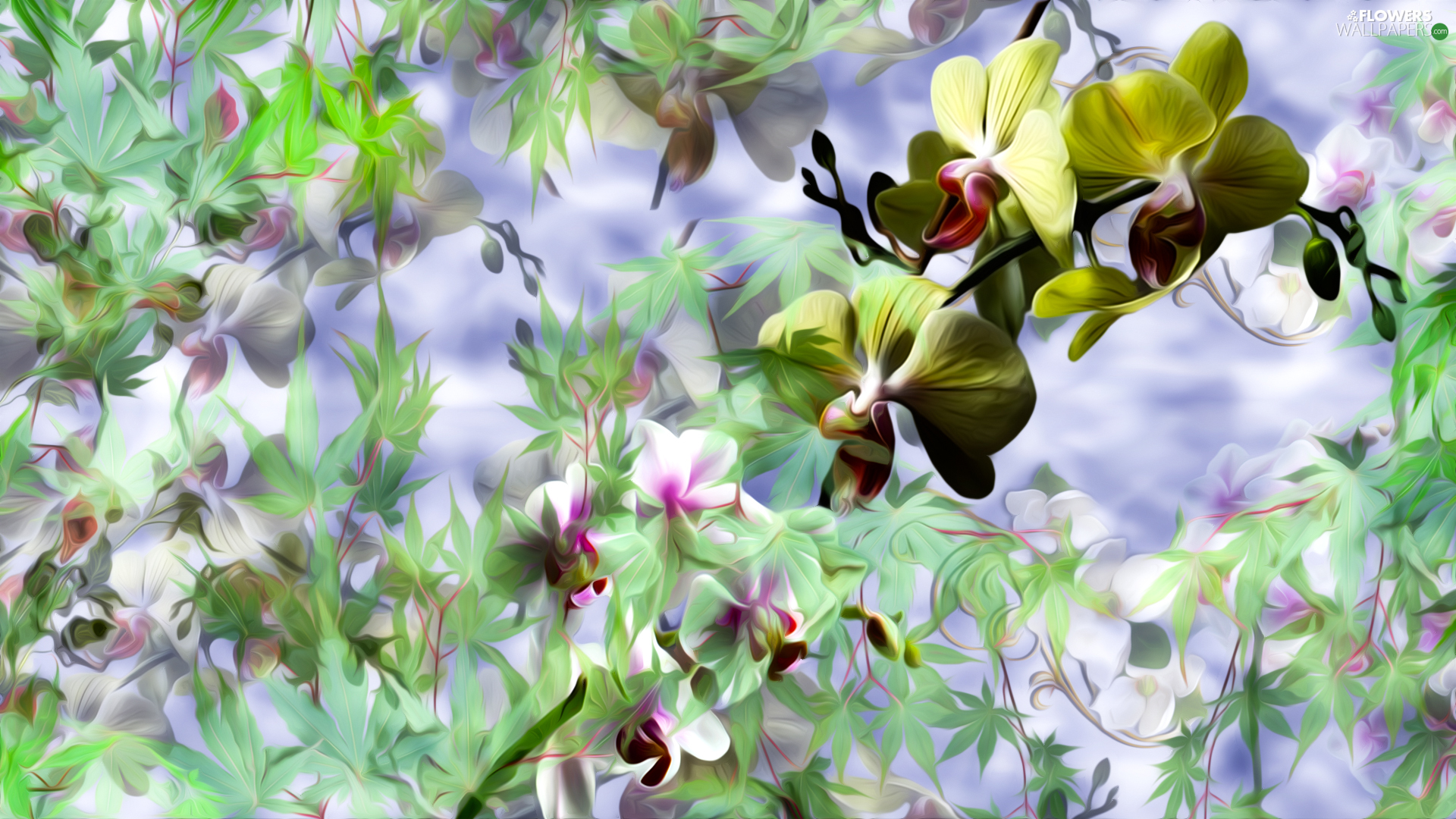 Flowers, Leaf, graphics, orchids