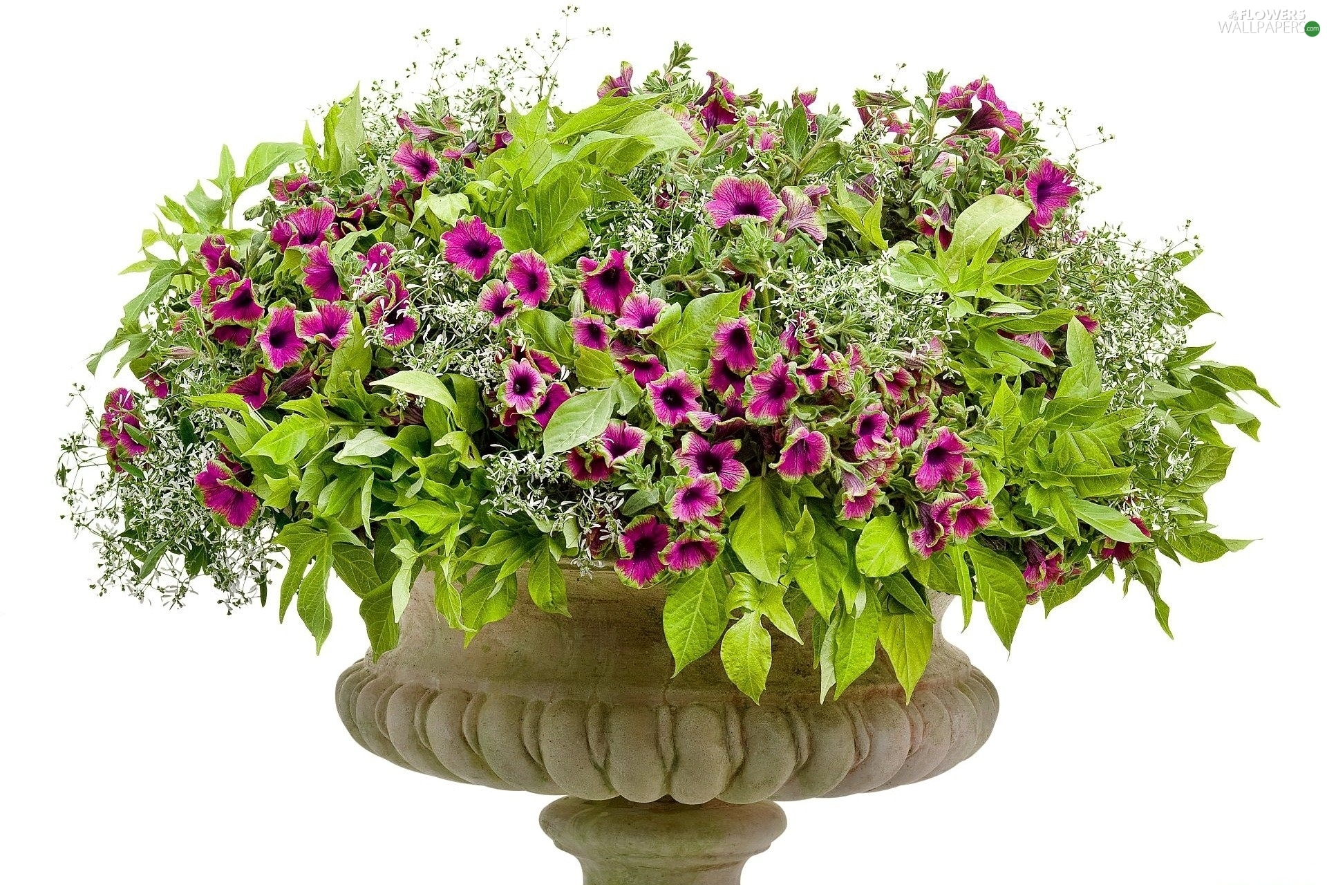 petunias, bowl, purple