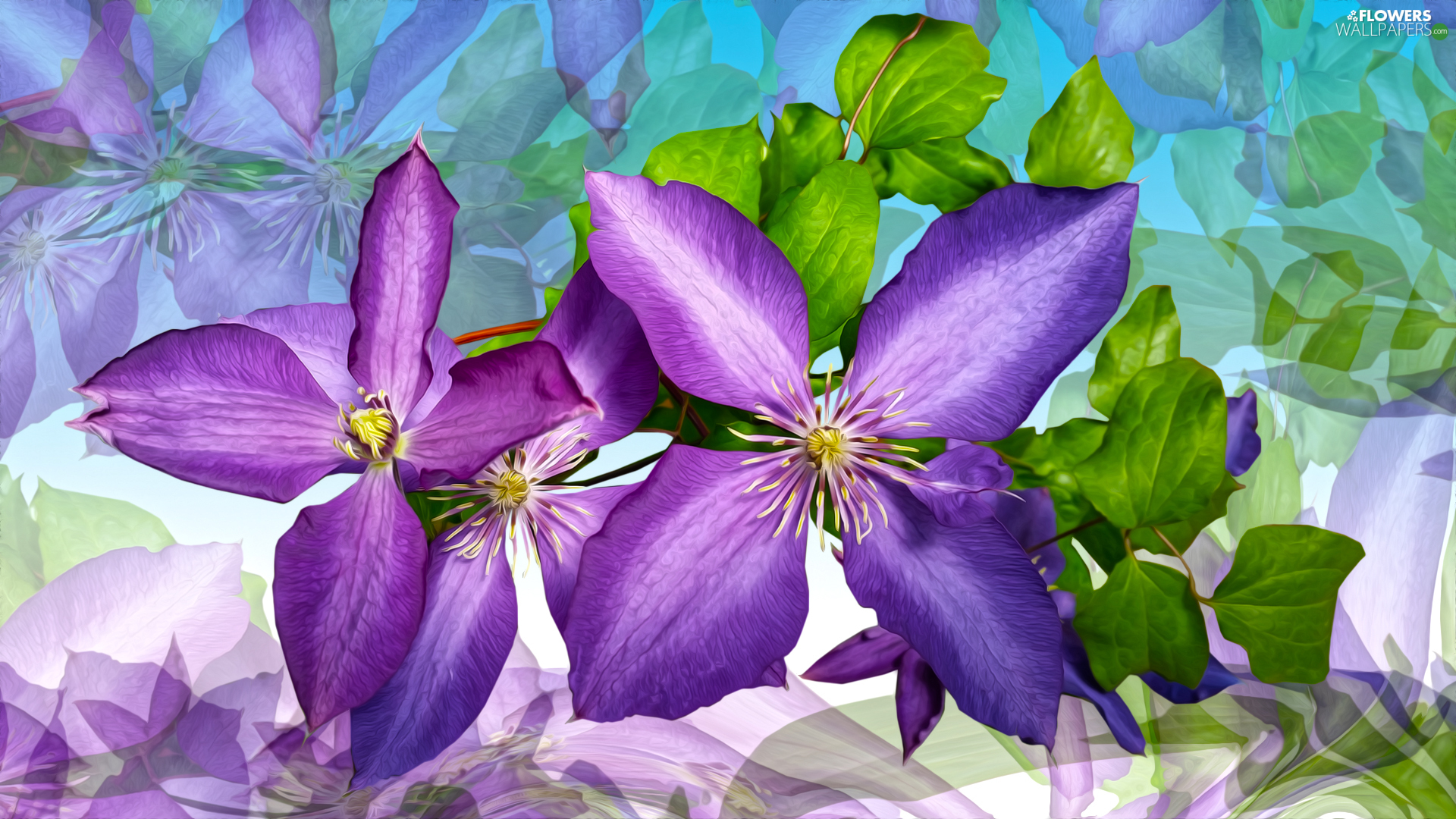 Flowers, Clematis, graphics, purple