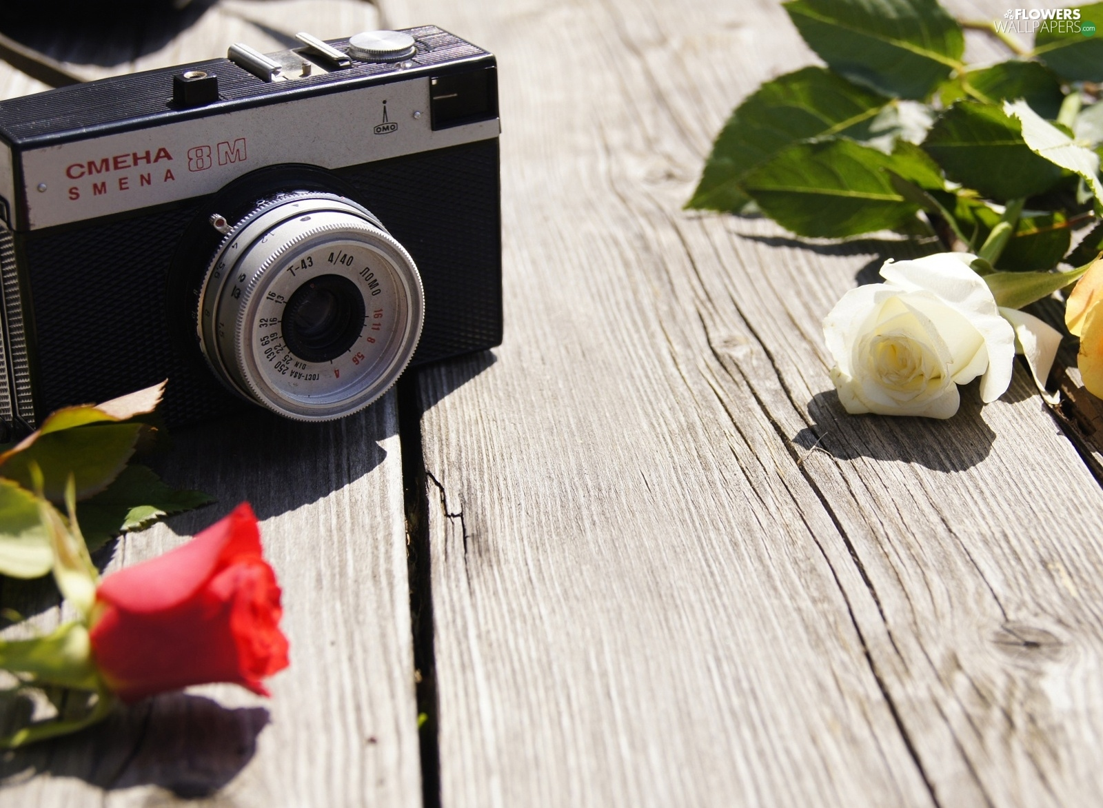 roses, Camera, photographic
