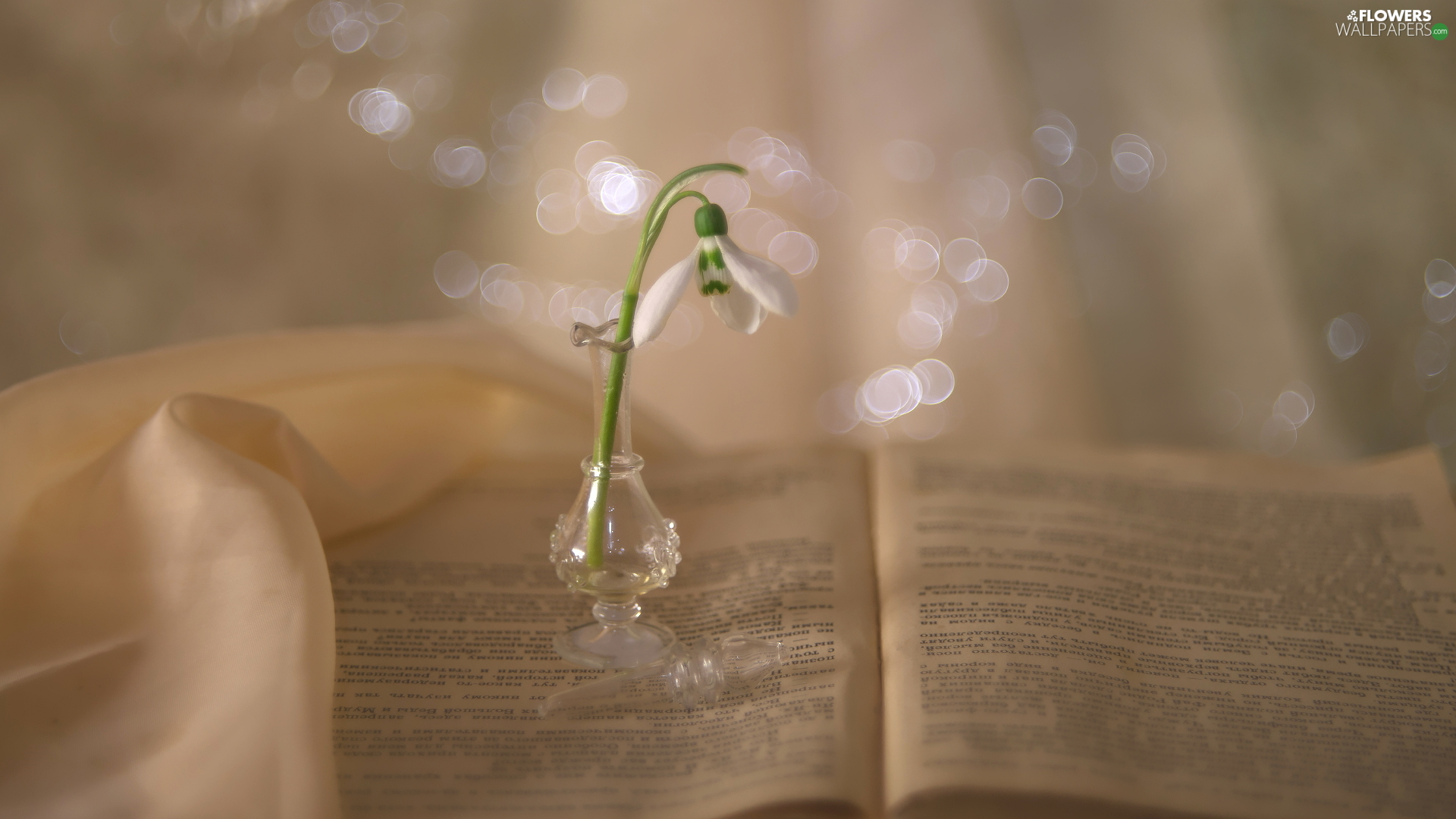 vase, Snowdrop, Book, glass, open