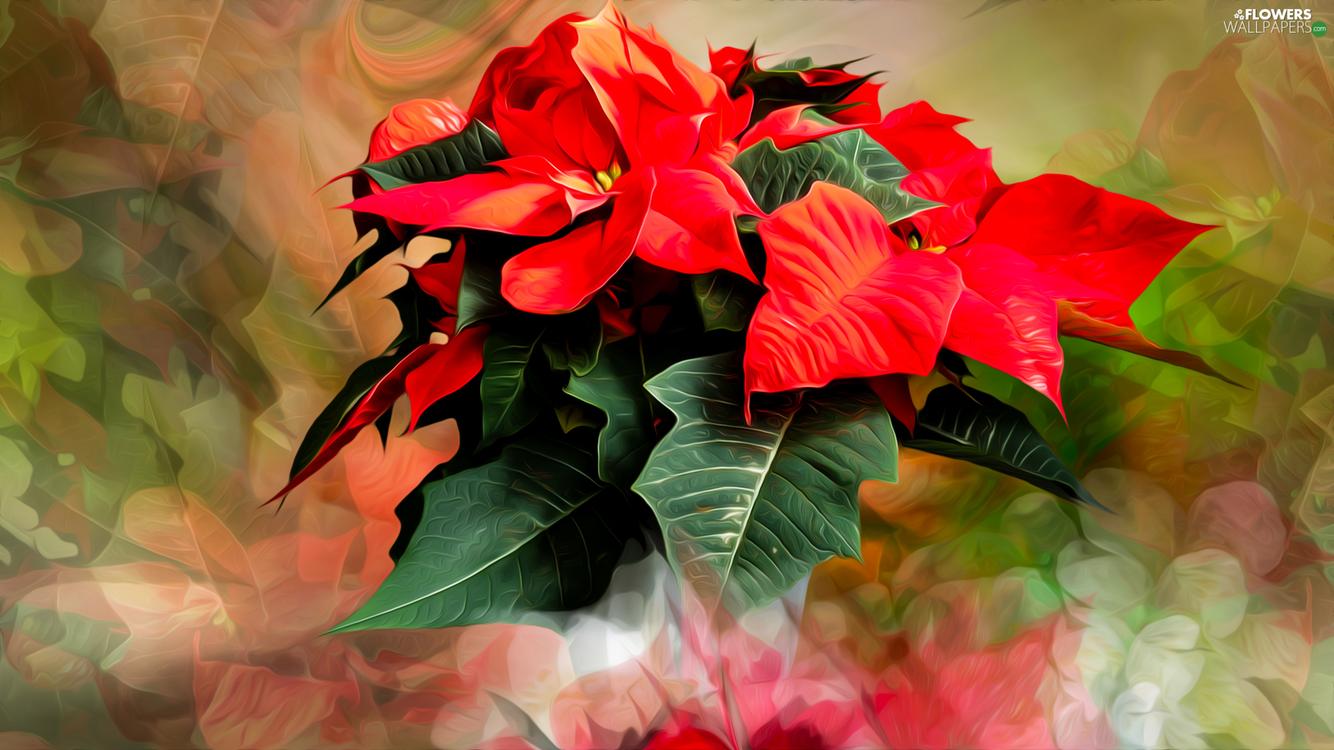 Flowers, poinsettia, graphics, star of Bethlehem