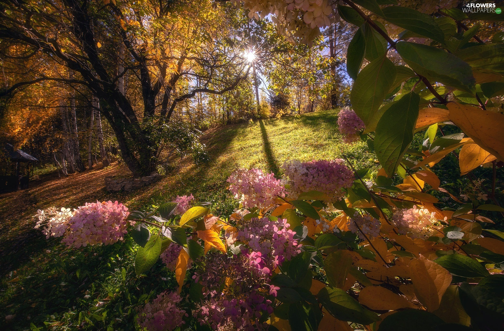 trees, Flowers, autumn, rays of the Sun, viewes, hydrangeas