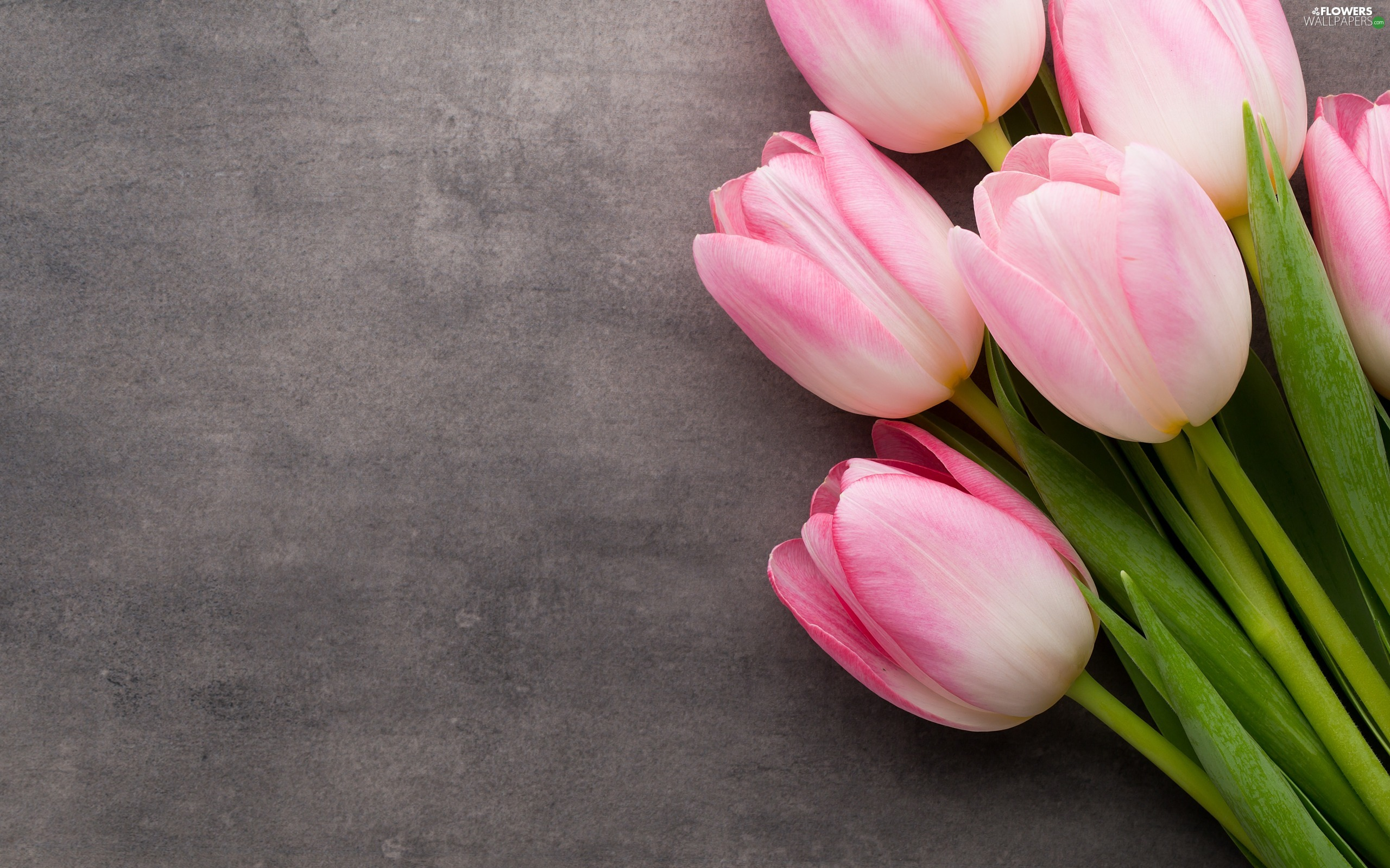 Tulips, bunch, Pink