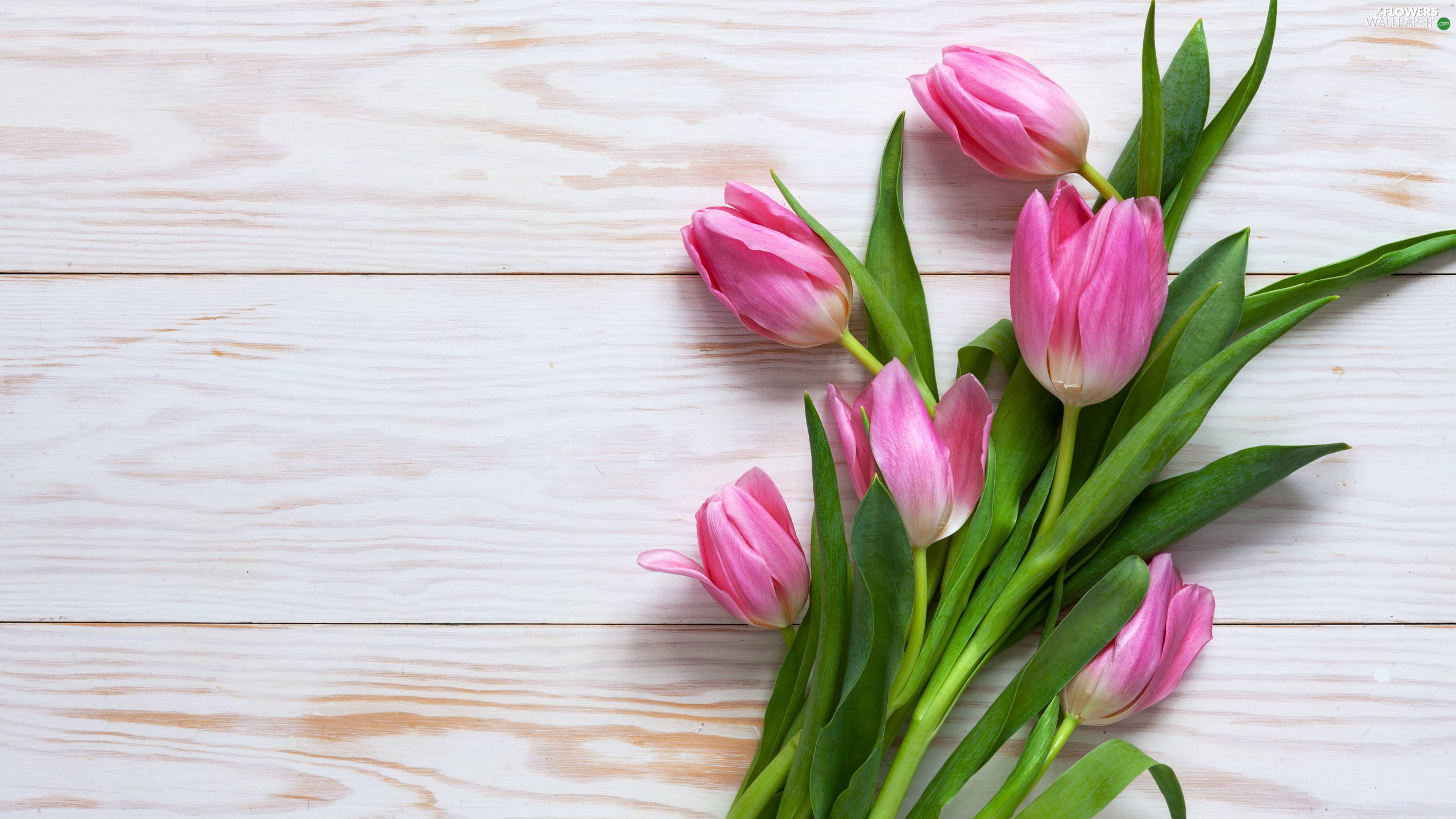Pink, boarding, White, Tulips